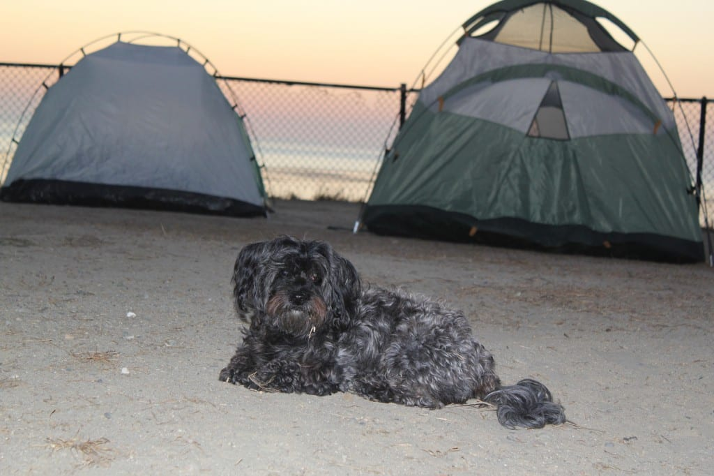 LOLA Camping in Northern California
